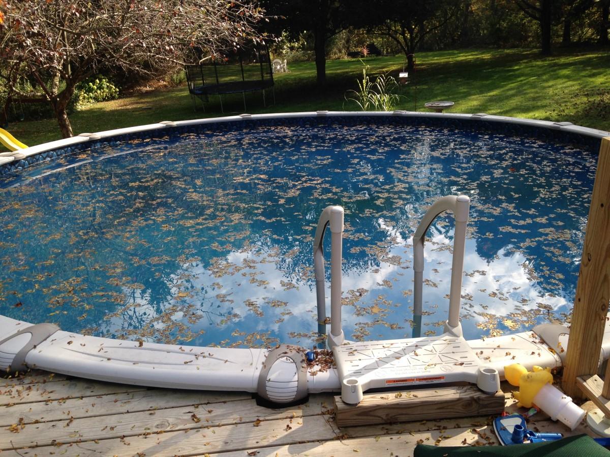 leaf pool foliage reflection swimming pool backyard leisure close leaves seasonal cleaning estate skimmer maintenance