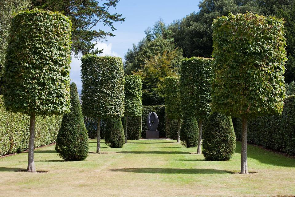 Park, Hedge, Garden, Trees, Trimmed, Cylinder, Cut